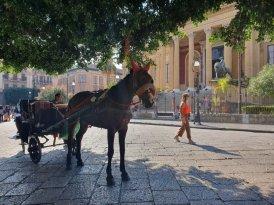 palermo_reportage_foto_sara_obici_emozione_riflessa-20191027_113302